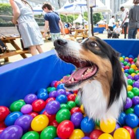 How This Event Gave Dogs Their Best Day Ever